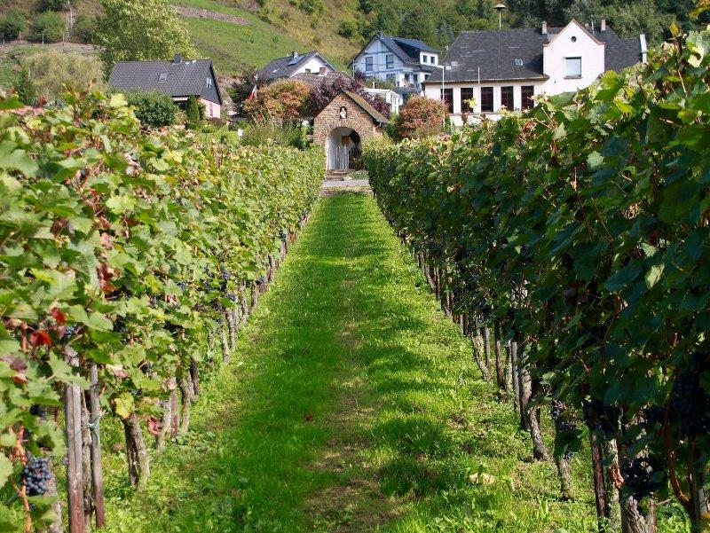 http://www.norbert-siemer.de/large/rheinsteig/Img_5292.jpg