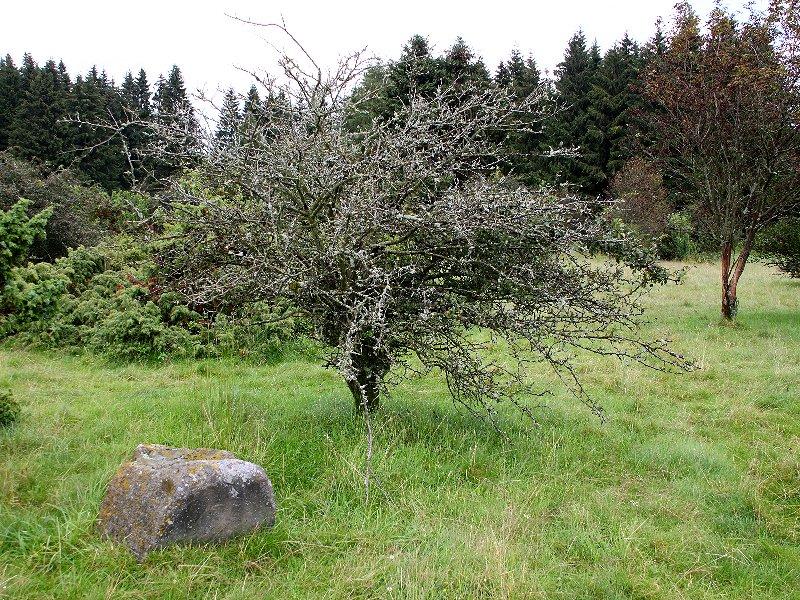 http://www.norbert-siemer.de/large/westerwald/Img_0102.jpg
